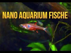 Ratgeber zum Nano Cube Aquarium und Bewohnern - Garnelen, Krebse, Schnecken und Fische