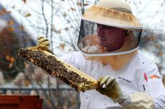 The Cleveland Convention Center has honeybees nearby and uses honey in its restaurant.