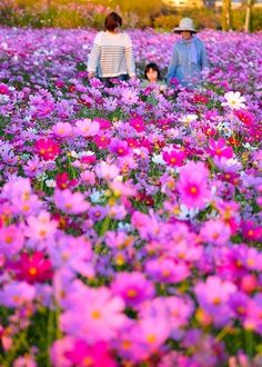 Yame city, Fukuoka Spring Flowers, Wild Flowers, Japanese Mountains, Field Of Dreams, Go Outdoors, Mother And Father, Color Photography, Wabi Sabi, Asia Travel