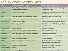 Faced with a pest problem? Learn a three-tiered approach to natural garden pest control: attract beneficial insects, employ effective physical pest controls such as handpicking and row covers, and use organic pesticides if needed.