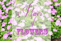 Power of Flowers image fort myers florida photographer