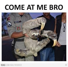 come at me bro, oh those sloths so hardcore