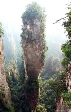 Funny pictures about Real life Avatar: Zhangjiajie National Forest Park in China. Oh, and cool pics about Real life Avatar: Zhangjiajie National Forest Park in China. Also, Real life Avatar: Zhangjiajie National Forest Park in China photos. Zhangjiajie, Places To Travel, Places To See, Beautiful World, Beautiful Places, Amazing Places, Amazing Things, Beau Site, Forest Park
