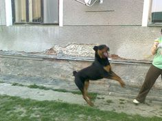 Ali akrobat