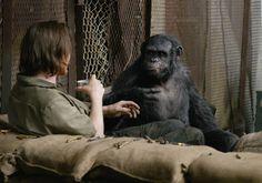 """""""Planeta dos Macacos: O Confronto"""" teve divulgado novo trailer http://cinemabh.com/trailers/planeta-dos-macacos-o-confronto-teve-divulgado-novo-trailer"""