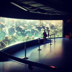 Another #discovery at @Cretaquarium @destination_c @VisitGreecegr @Greek_Spirit Discovery, Aquarium, Greek, Spirit, Twitter, People, Goldfish Bowl, Aquarium Fish Tank, Aquarius