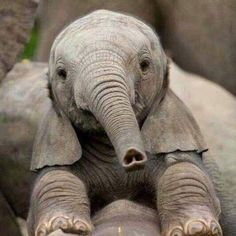 Upside down heart on baby elephant trunk - SO sweet! Cute Creatures, Beautiful Creatures, Animals Beautiful, Cute Baby Animals, Animals And Pets, Funny Animals, Large Animals, Nature Animals, Wild Animals