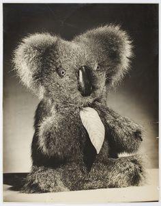 Aussie Bear toy koala, ca. 1944-1945 / photographed by Milton Kent and Noel Rubie