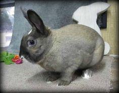 Nyla :: #bunny #rabbit #rescue