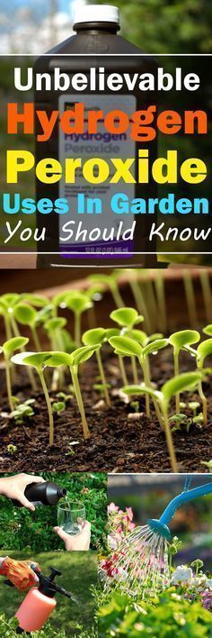 Is it possible? Are there Hydrogen Peroxide Uses in the garden? Well, yes, it can be useful! Read on to find out how. | Balcony Garden Web