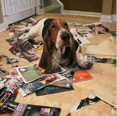 """I don't know who made this mess; it was here when I walked in!"""