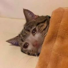i dont want to inconvenience the body clean up crew - depression_memes Sad Cat Meme, Cat And Dog Memes, Cute Cat Memes, Cute Animal Memes, Funny Animals, Cute Animals, Funny Memes, Cute Cats, Funny Cats