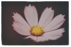 Flower, Macro, Kelly Olivares Photography Copyright 2015, Arlington, TX