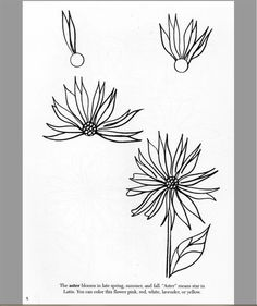 Customer Image Gallery for How to Draw Flowers (Dover How to Draw) tangle flower pattern Let's Make Art, Diy Art, Plant Drawing, Painting & Drawing, Drawing Techniques, Drawing Tips, Doodle Drawings, Flower Drawings, Zentangle Patterns