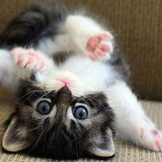 #Cute #little #kitten #lying #upside #down