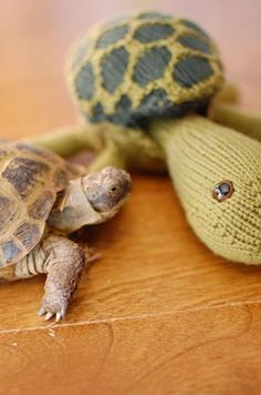 Sheldon the knit tortoise, meet HotRod, the real live tortoise. Sulcata Tortoise, Giant Tortoise, Knitting Stitches, Knitting Patterns, Baby Animals, Cute Animals, Popular Crochet, Turtle Love, Turtles