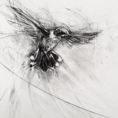 how to draw tears Unique Drawings, Bird Drawings, Animal Drawings, Drawing Birds, Movement Drawing, Charcoal Drawing, Abstract Charcoal Art, Organic Art, Artist Sketchbook