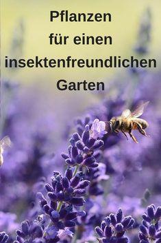 Bienenfreundlicher Garten – die richtigen Pflanzen Bee-friendly garden – the right plants / # right