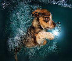 Playful Photos of Adorable Puppies Swimming Underwater - My Modern Met