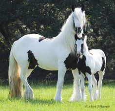 gorgeous mare and colt