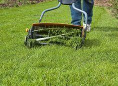 Comment avoir une belle pelouse - 1 - Désherber la pelouse