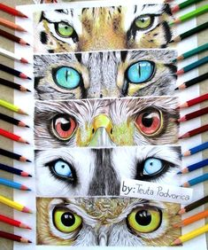 animal art projects - Animals eye drawing by Teuta Podvorica Regard Animal, Classe D'art, Middle School Art Projects, 7th Grade Art, Drawing Projects, Drawing Ideas, Drawing Prompt, Drawing Tutorials, Drawing Tips
