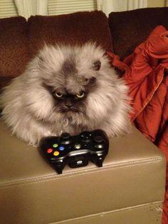 Another grumpy kitty...