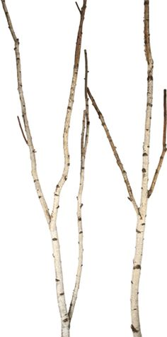 Decorative Branches / Paper Birch Trees and Forks