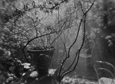 Photo Lens: Josef Sudek – The Poet of Prague | Tres Bohemes
