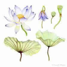 Image result for margaret mee botanical artist