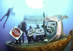 Anti-shark hunting demonstration. Photo By: BOAZ SAMORAI