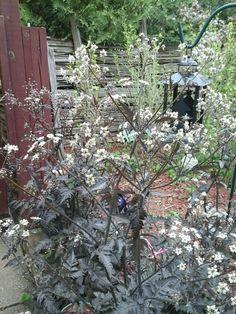 Our Garden In Smithville  Ontario,