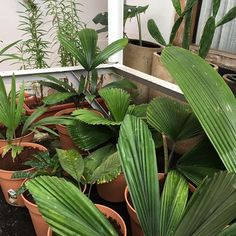 Photos and Videos House Plants, Photo And Video, Videos, Photos, Instagram, Home Plants, Houseplants, Foliage Plants, Video Clip