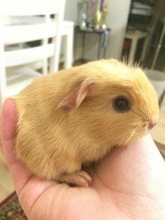 So tiny! <3