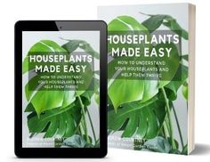 How To Propagate Ivy In Water - Step By Step Guide - Smart Garden Guide Phalaenopsis Orchid Care, Orchid Plant Care, Snake Plant Care, Jade Plants, Orchid Plants, Orchid Leaves, Plante Anthurium, Calathea Plant, Plant Propagation