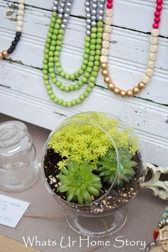 Succulent terrarium planter www.whatsurhomestory.com