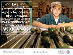 Las buenas prácticas agrícolas generan oportunidades de desarrollo de mercado para productores y exportadores mexicanos . SAGARPA SAGARPAMX #MéxicoAgroPotencia