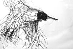 Jason Gathorne-Hardy suffolk artist - bird drawings & sketches