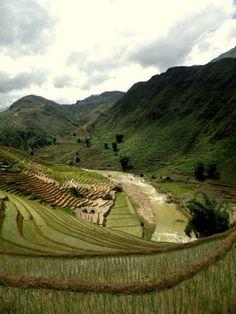 Rice fields in Sapa, Vietnam #travel