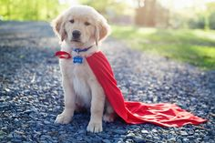 Golden superhero