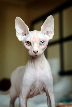 Sweet... Beautiful Cats Pics Youtube #google