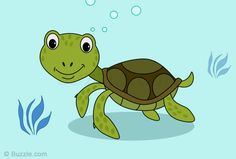 Colorful cartoon turtle