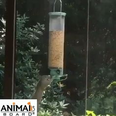 OMG crazy squirrel - Funny And Healthy Funny Animal Videos, Cute Funny Animals, Funny Animal Pictures, Cute Baby Animals, Animal Memes, Funny Cute, Cute Dogs, Cute Pictures, Hilarious