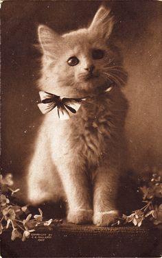 Cute #vintage kitten