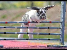 Kaninhoppning och Kaninfilm - YouTube