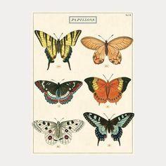 """Alfred: Fin sommerfuglplakat eller bilde     Plakat nr 39 """"Papillons"""" (2)"""