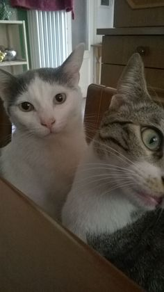 Piero Cat | Pawshake Den haag
