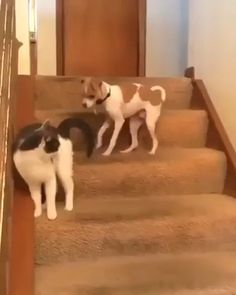 Booster Mode Enabled 😼🐶 💨 Source by inspiringdad videos wallpaper cat cat memes cat videos cat memes cat quotes cats cats pictures cats videos Cute Funny Animals, Cute Baby Animals, Funny Cute, Cute Cats, Cute Animal Videos, Funny Animal Pictures, Funny Animal Memes, Cat Memes, Cat And Dog Videos