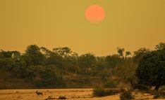 Kudu Bull near the Letaba River on the near Letaba Camp Portrait Images, Pet Portraits, Kruger National Park, National Parks, Lion Walking, Baobab Tree, Elephant Walk, Tree Forest, Animals Images