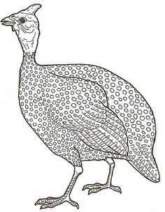Guinea clipart guinea fowl - 15 Hight quality cliparts for free - BJ Ambis Farm Animal Quilt, Guinea Fowl, Ink Pen Drawings, Chicken Art, Aboriginal Art, Colouring Pages, Pyrography, Fabric Painting, Bird Art